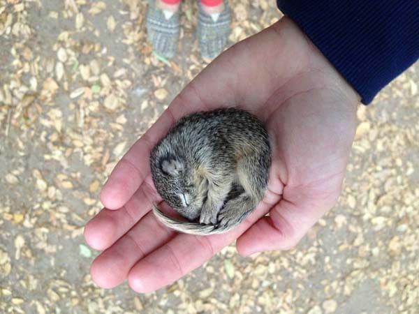 Squir1