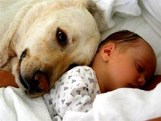 13 Meilleurs Amis Chiens Bébé Qui Vont Vous Faire Fondre