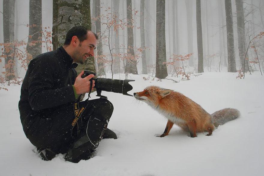 fox202