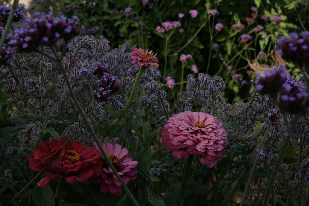 Lawn garden30