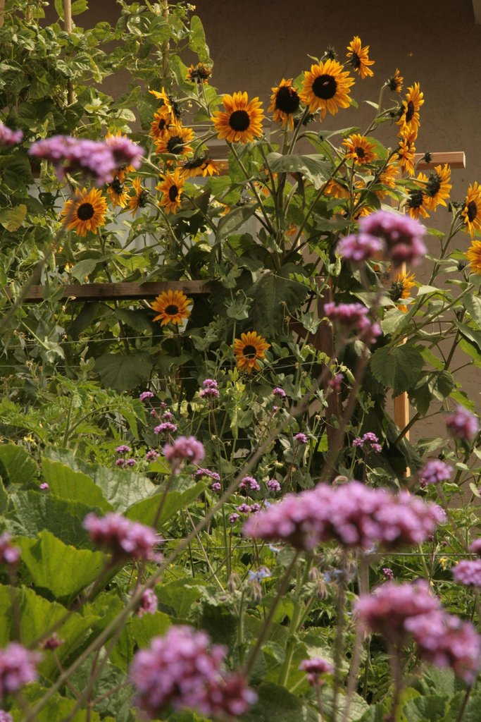 Lawn garden31