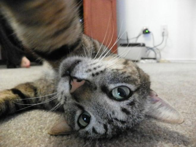 Selfcat11