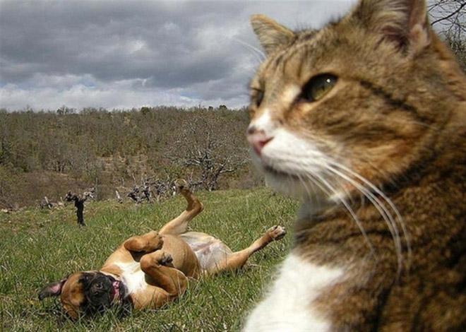 Selfcat15