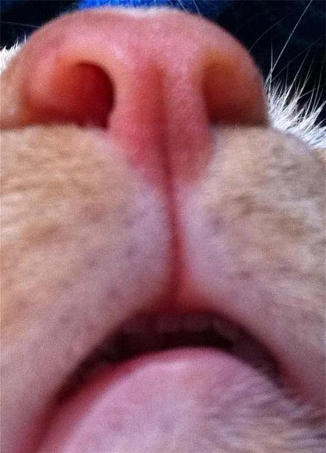 Selfcat19