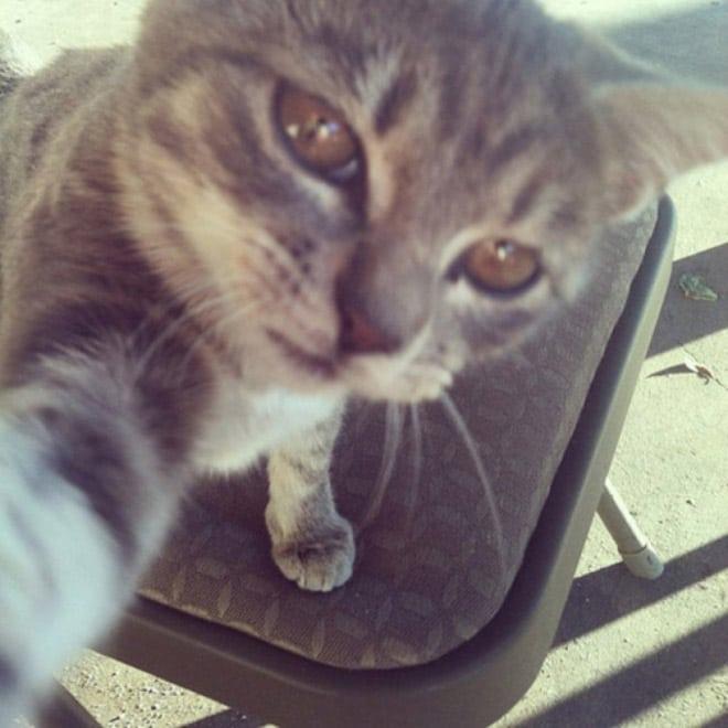 Selfcat3