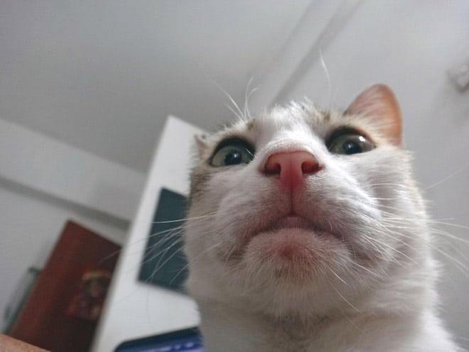 Selfcat6