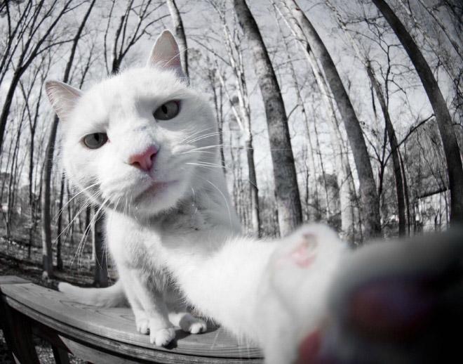Selfcat8