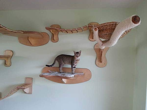 catf8