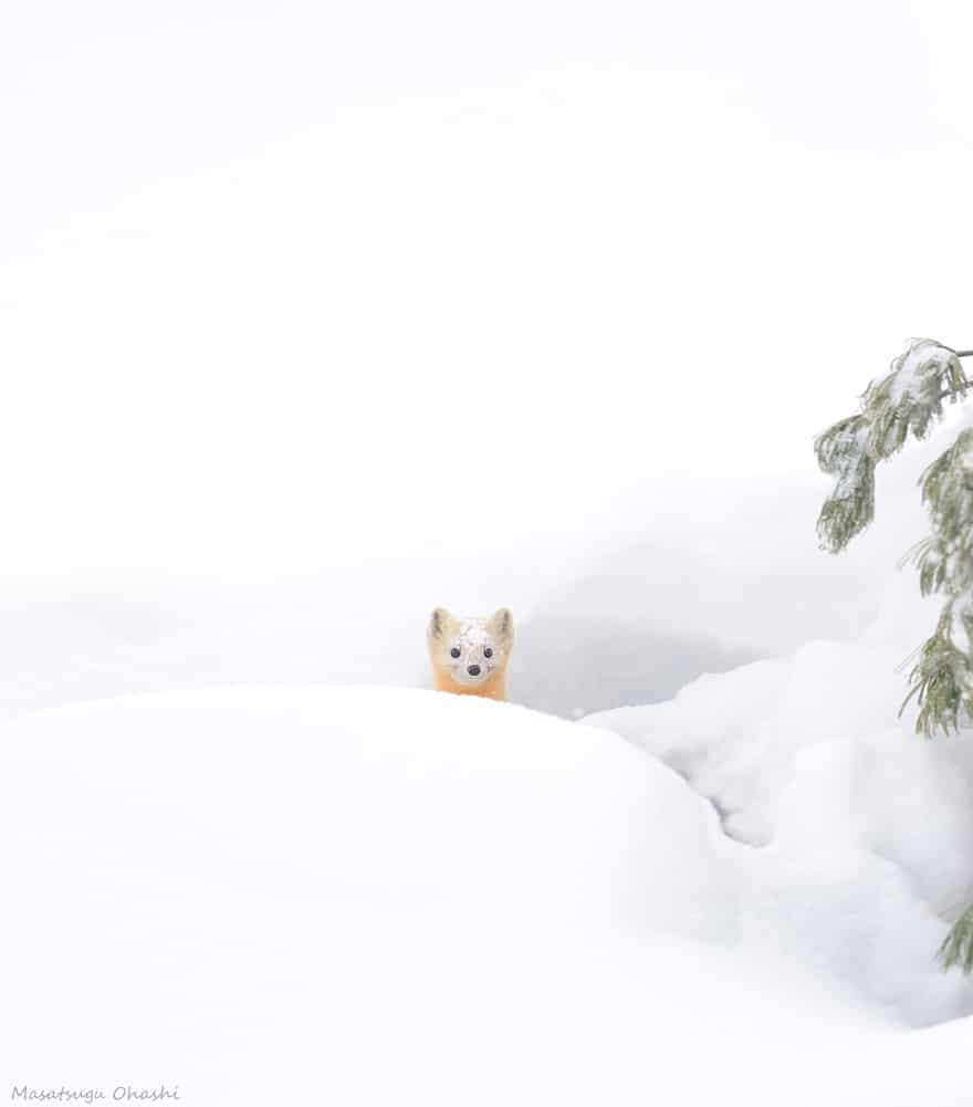 Winter141