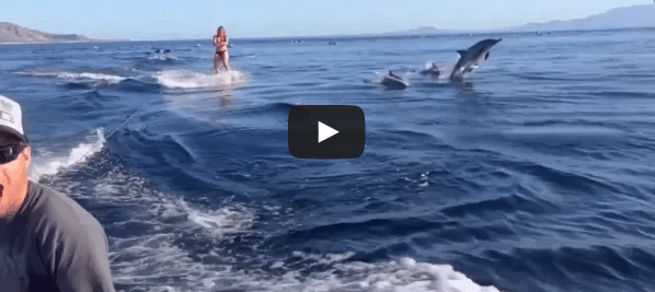 A pod of dolphins chase a woman wakeboarding my heart is still racing from watching this