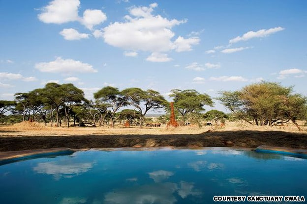 Sanctuary swala tarangire tanzania