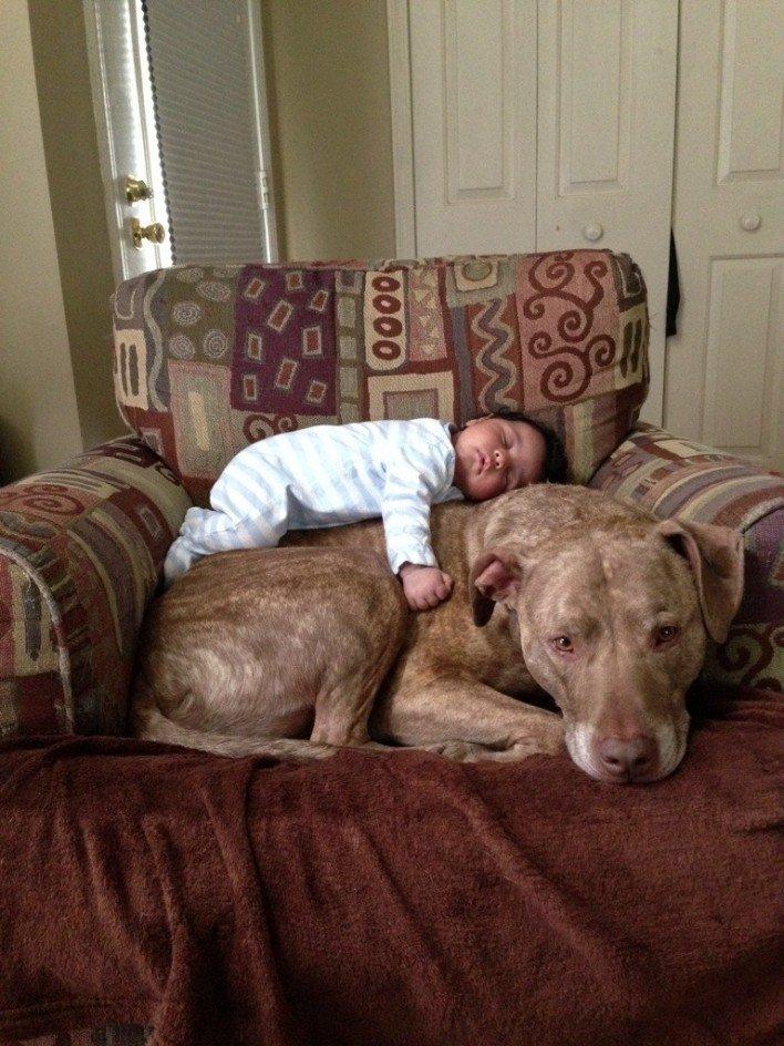 25 photos de pitbulls terrifiantes en particulier la 14 for Acheteur maison du monde