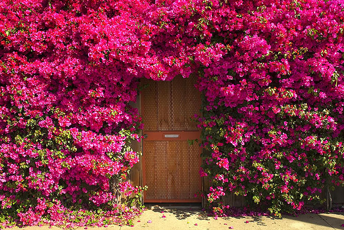 amazing-old-vintage-doors-photography-25