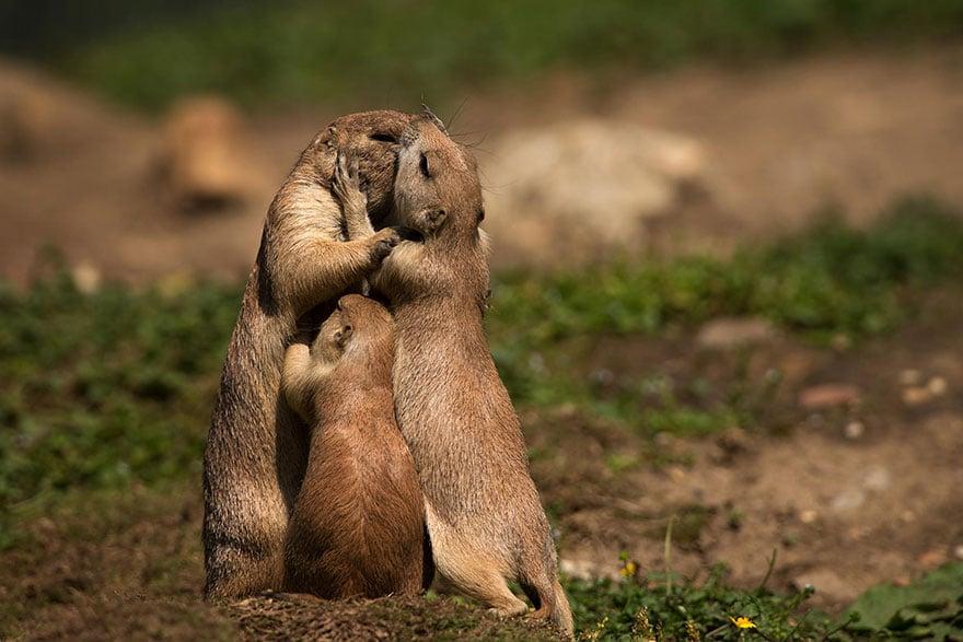 Animal parents 10