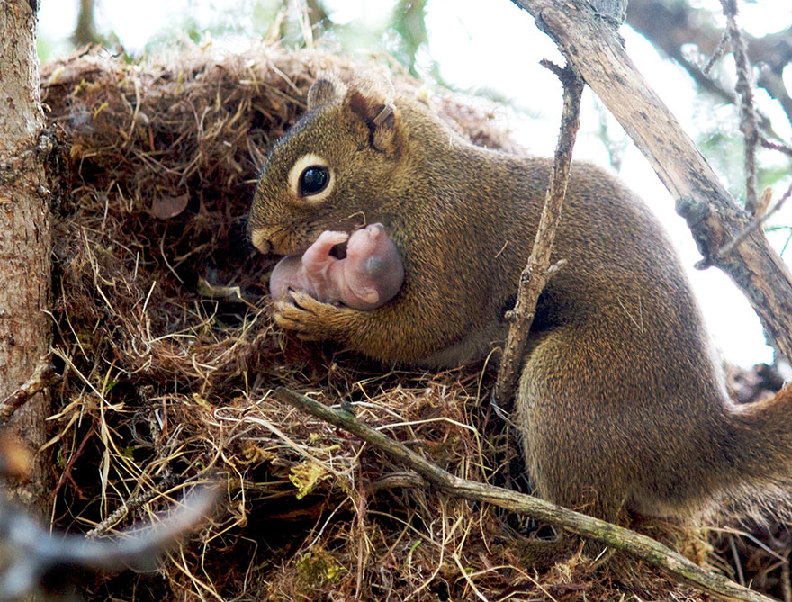 Animal parents 14