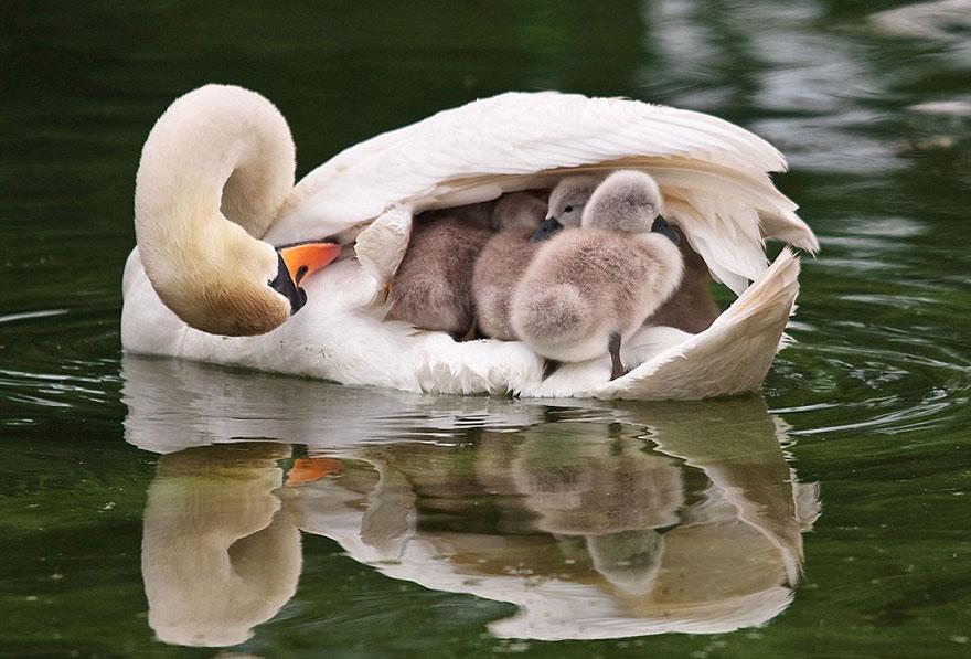 Animal parents 2