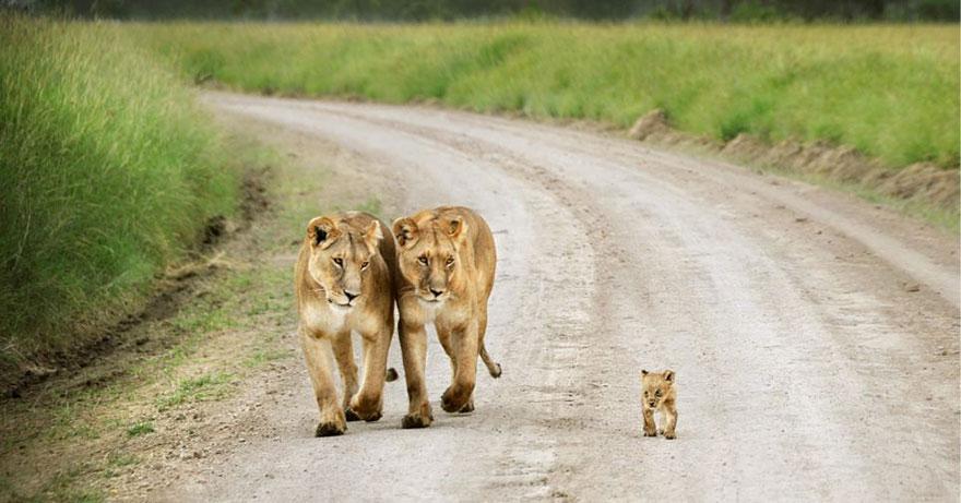 Animal parents 23