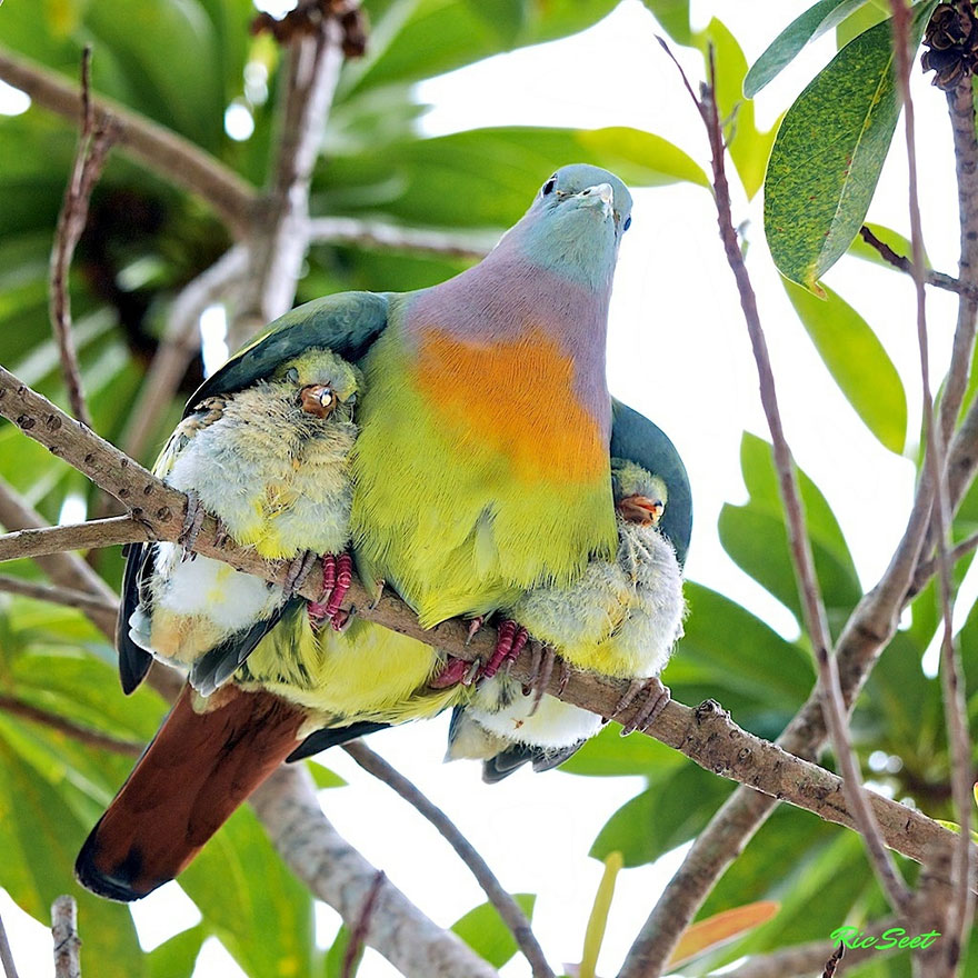 Animal parents 4