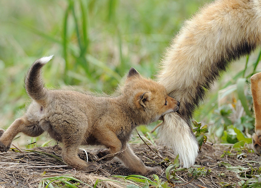 Animal parents 7