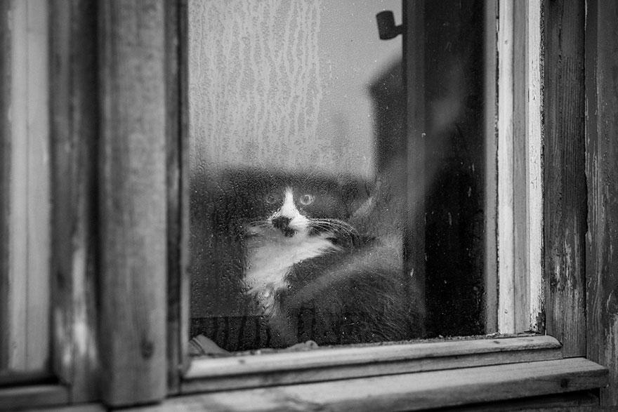 cat-waiting-window-1
