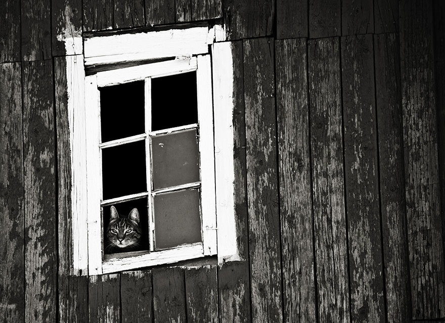 cat-waiting-window-10