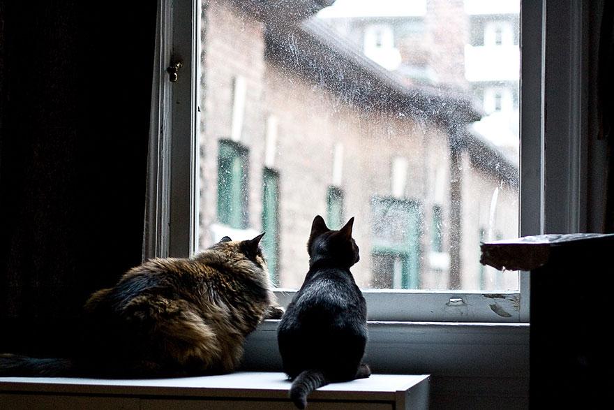 cat-waiting-window-30