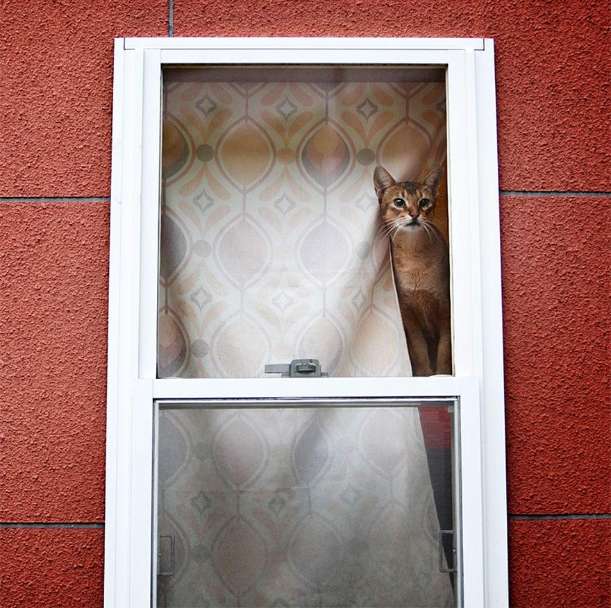 cat-waiting-window-5
