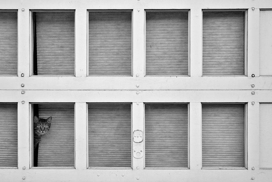 cat-waiting-window-53