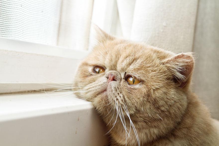 cat-waiting-window-60