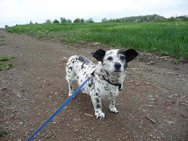 mixed-breed-dogs-21