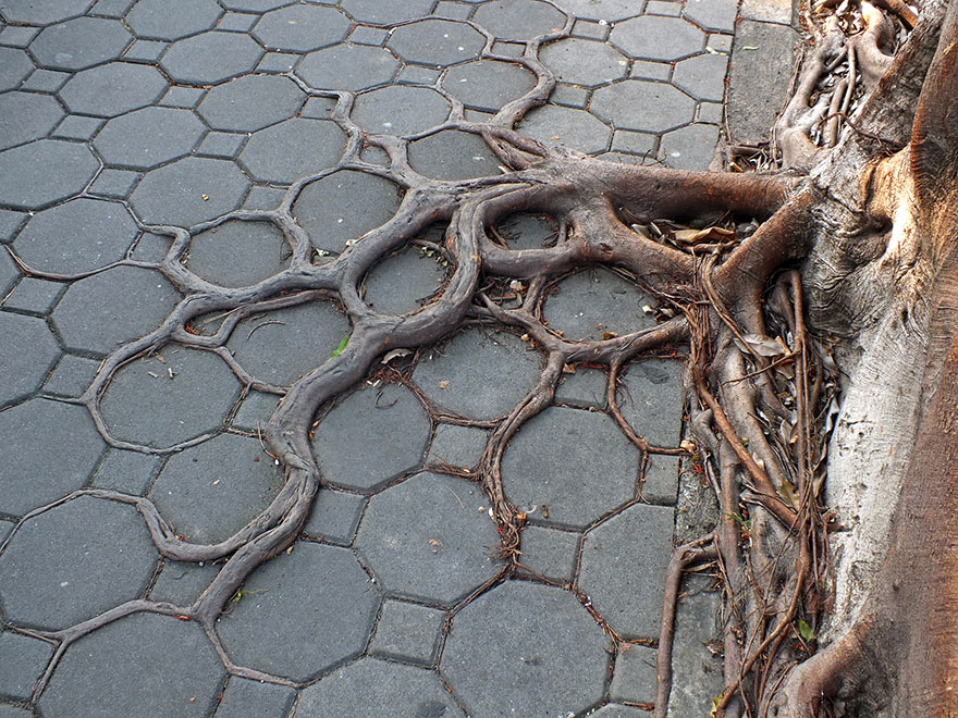 Root5