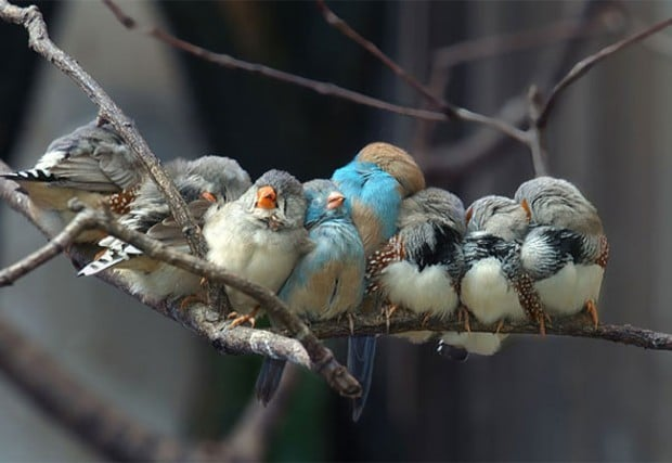 loving-animals-using-each-other-as-pillows-my-heart-has-melted-completely-16-620x-620x