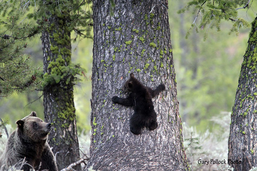 Bear hibernation quotes