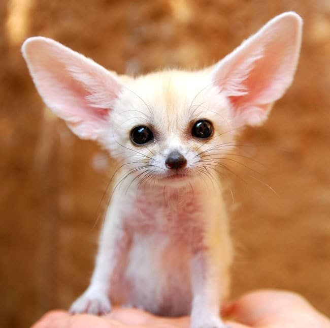 the-cutest-baby-animal-species-of-all-time-7-934x-934x
