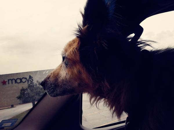 Beardog2