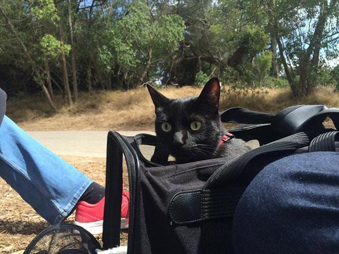 chatinterieur7
