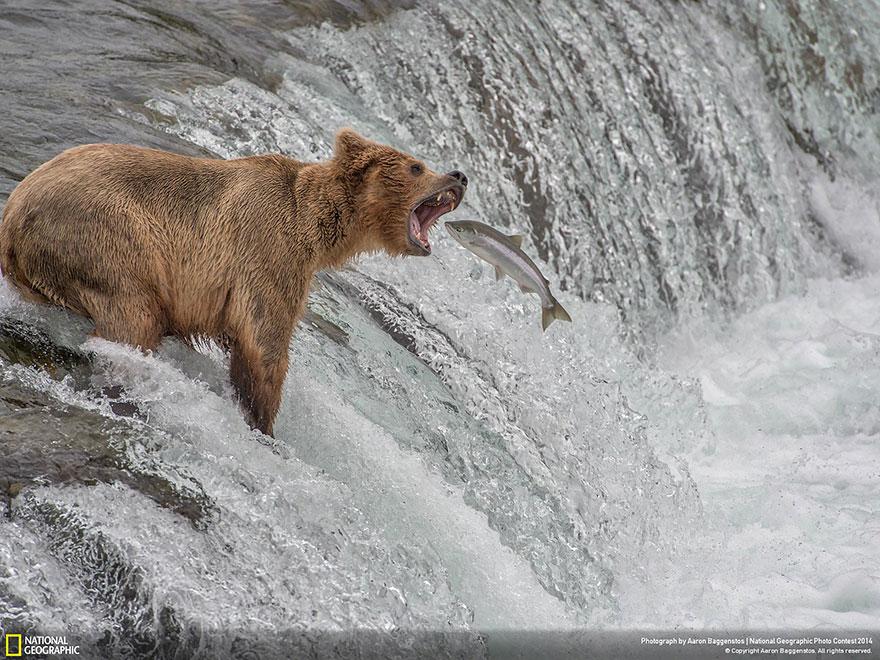 Les 21 Plus Belles Photos Du Concours National Geographic