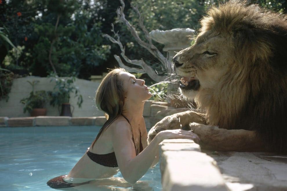 Melanie griffith lion3