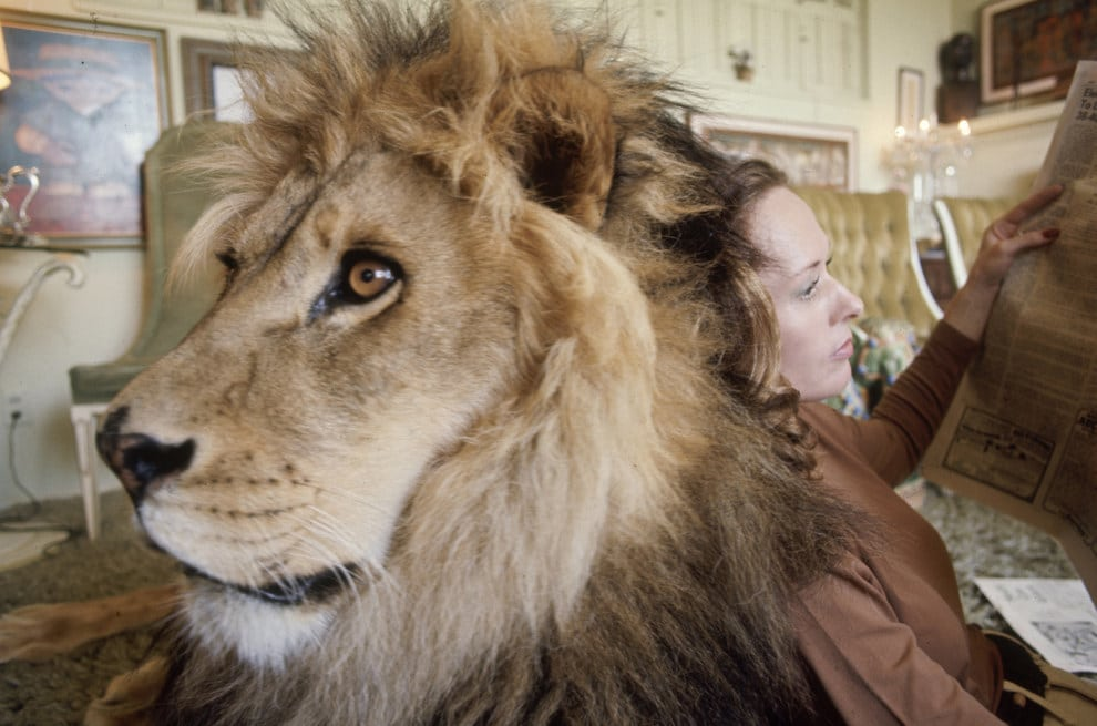 Melanie griffith lion6