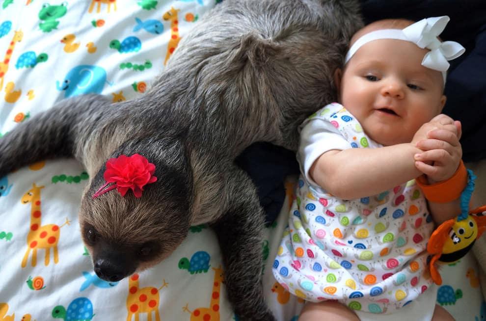 bebe paresseux 11