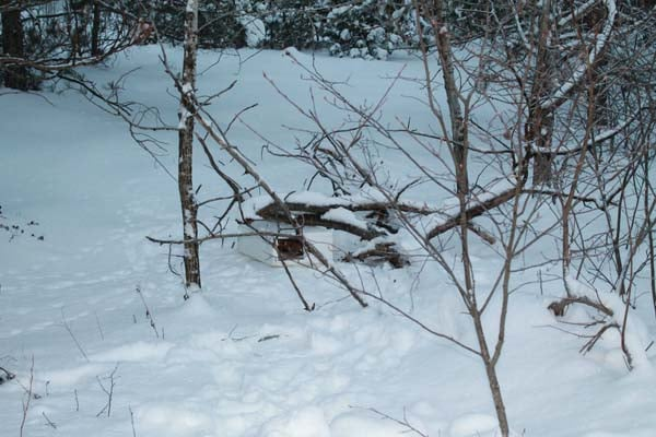 boite neige chaton 1