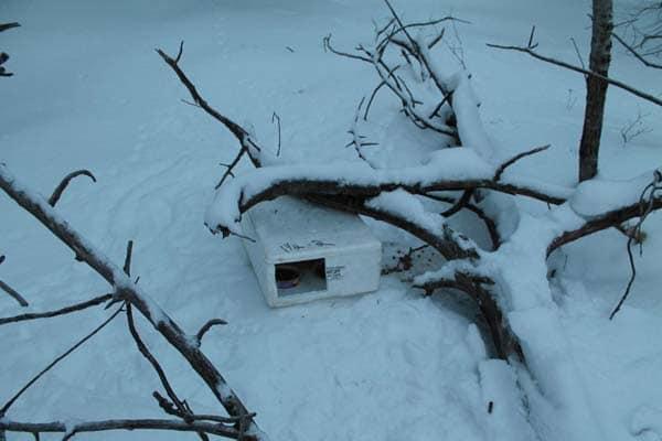 boite neige chaton 2