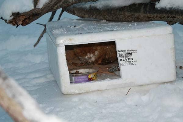 boite neige chaton 3