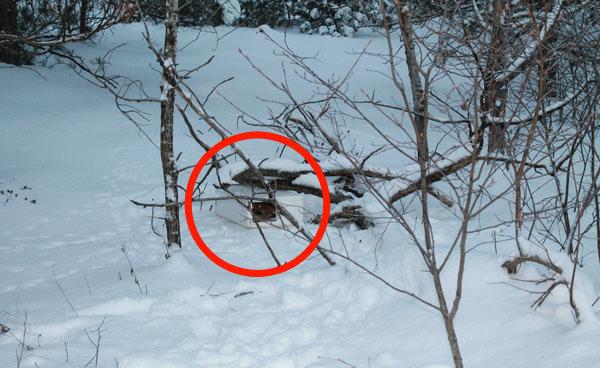 Boite neige chaton fb