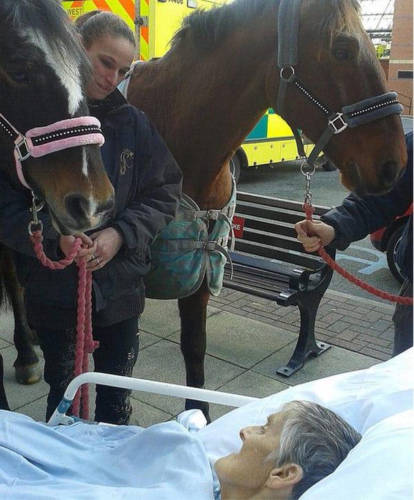 cheval femme cancer 2