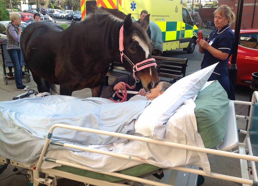 une patiente au stade terminal de son cancer fait ses adieux son cheval pr f r un instant. Black Bedroom Furniture Sets. Home Design Ideas