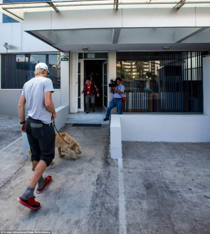 chien errant marche 11