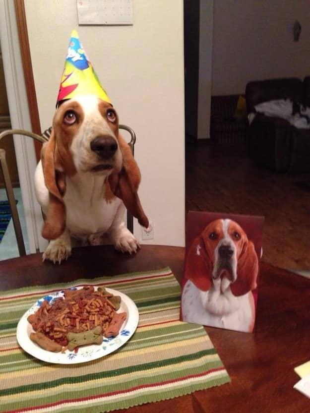 chien meilleur ami 15
