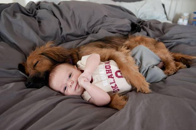 chien meilleur ami 18