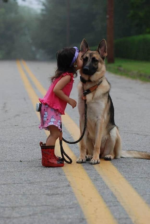 chien meilleur ami 20